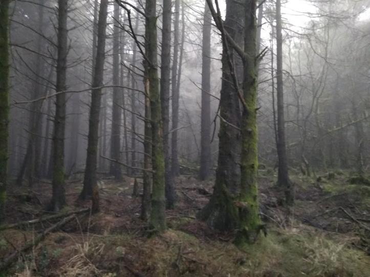 Rebecca Parfitt Forest Ghastling